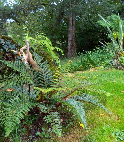 Foug res rustiques plantes d 39 ext rieur en situation for Plante tropicale exterieur
